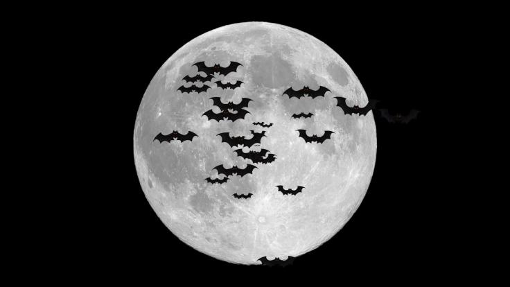bats-flying-over-full-moon_stgmlttx4g_thumbnail-full02