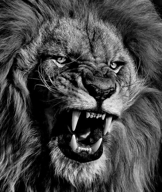 LION OF JUDAHroar2